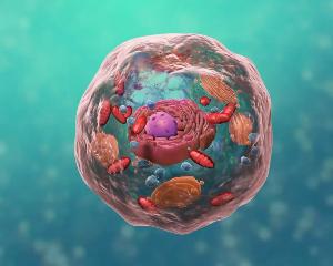 生物科技细胞结构:医学动画